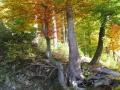 balve-herbst2012-17