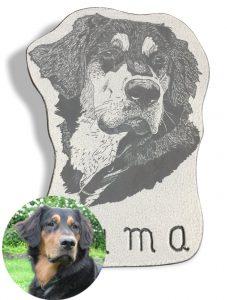 Buma Hund Portrait