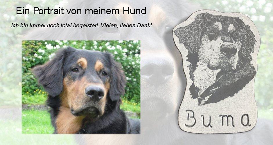 Hund Buma Porträt